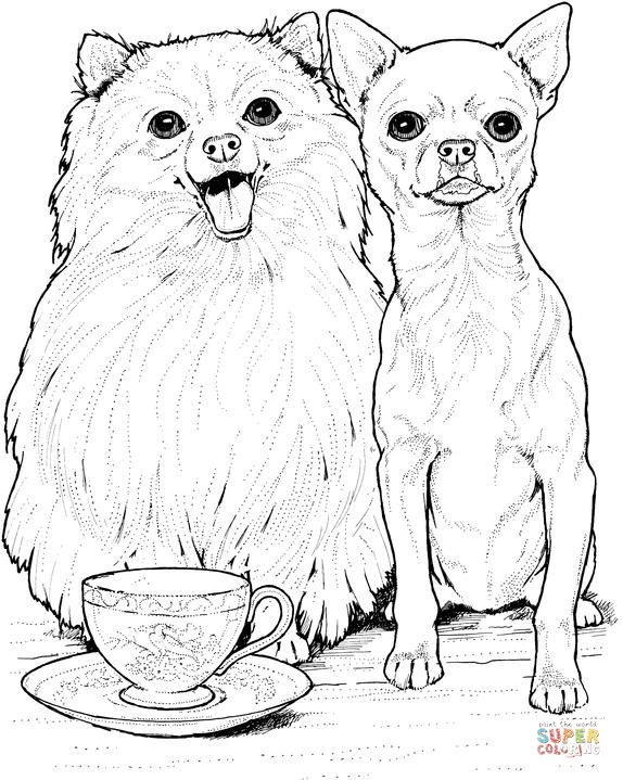 Pomeranian Dog And Chihuahua Super Coloring Dog Coloring Page