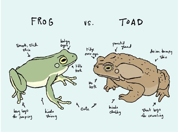 Frog Vs Toad Art Print Clash Of The Anurans Pinterest Toad