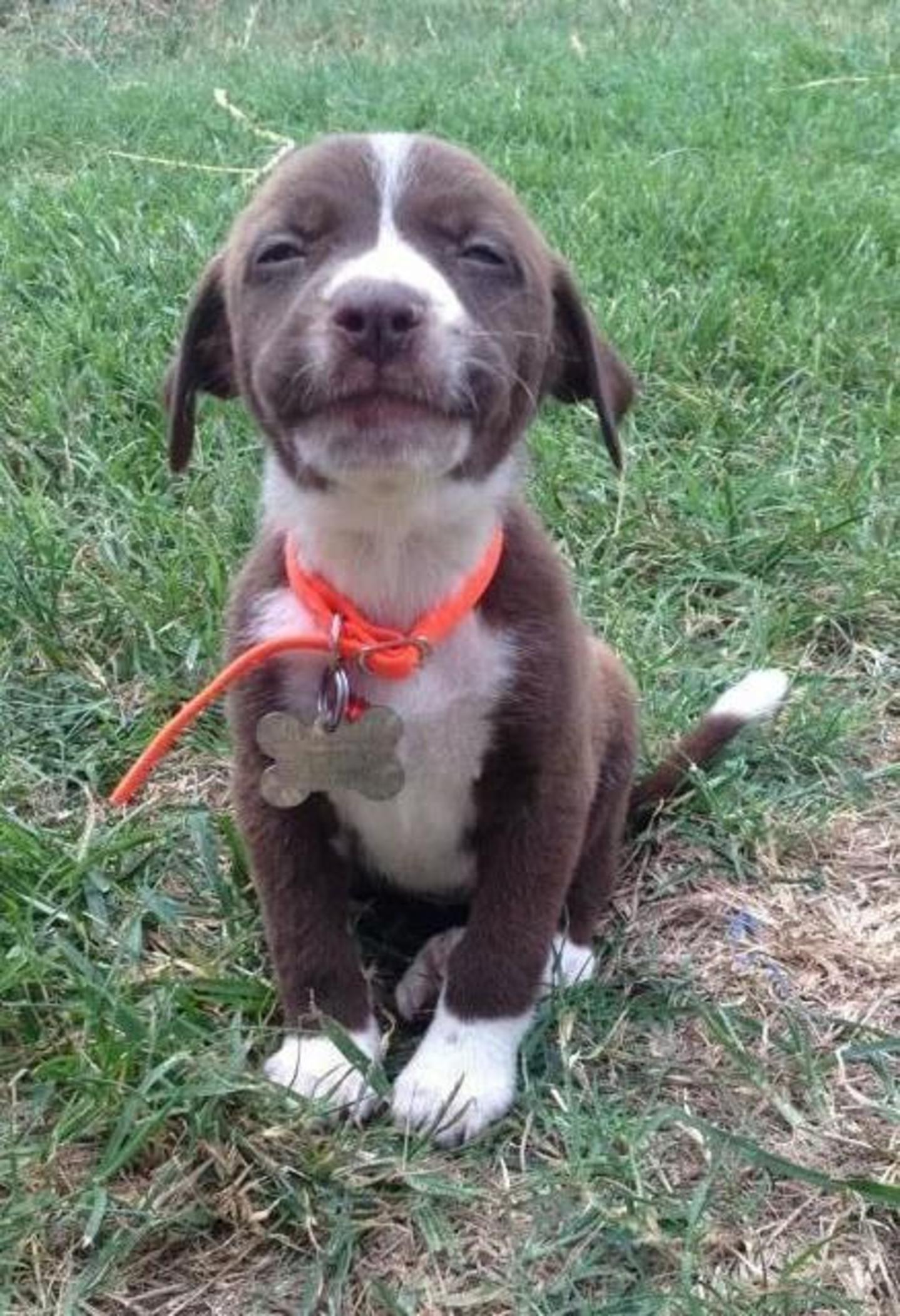 los perros más expresivos
