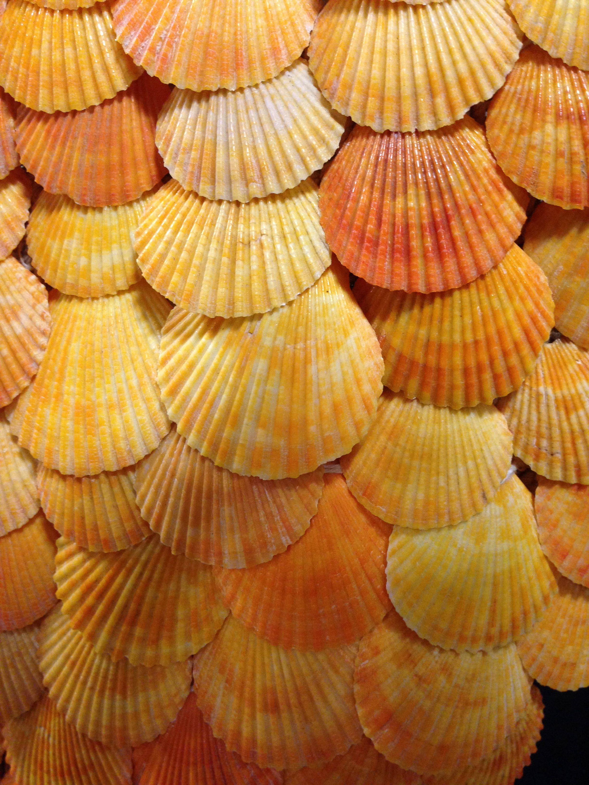 Texture detail for orange seashell necklace art