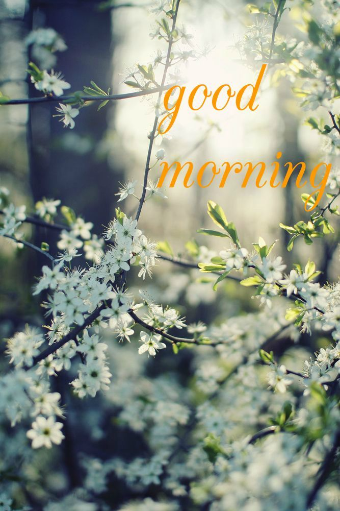 Time To Start The Day Good Morning Images Good Morning Cards Spring Nature Nature