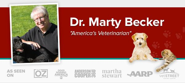 Dr Marty Becker America S Veterinarian Veterarian Expenses Pet Emergency Your Dog Dog Blog