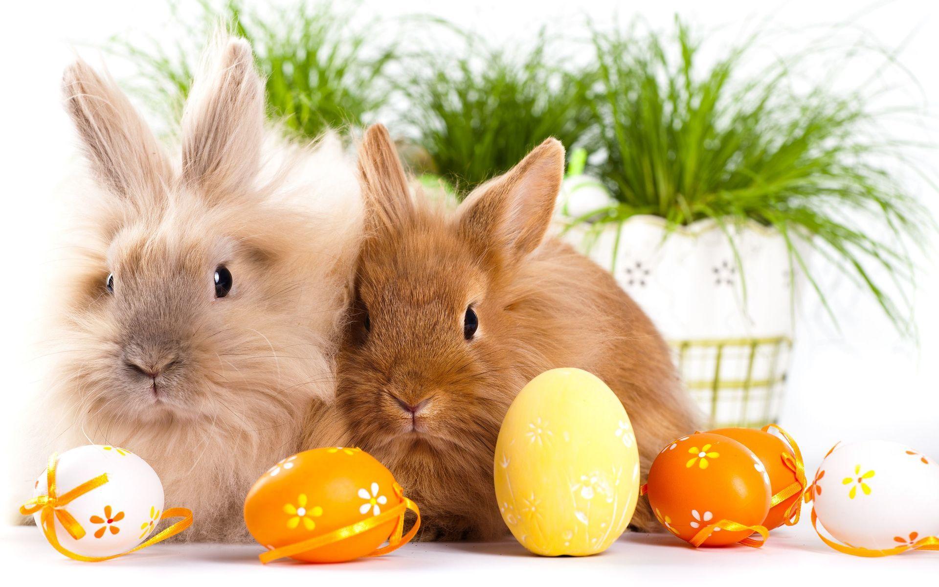 Bunnies And Eggs Wallpaper Easter Wallpaper Bunny Eeaster