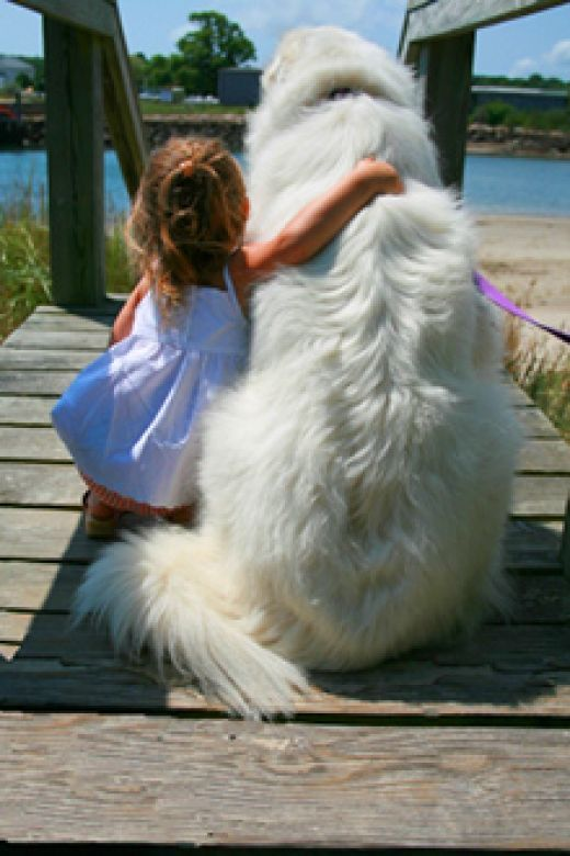 "I was driving through NJ with my best friend SIerra (great pyrenees) and i stopped for gas, while the attendant was filling my car and I was cleaning my front window he asked ""Hey lady do you know you've got a white bear in the back of you car?""   that's my girl #greatpyreneeslove"