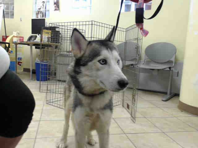 03 21 17 Houston Extremely Urgent Leah Id A479919 My Name Is