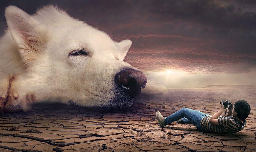 El Nuevo Museo Es Financiado Por La Asociación Profesional De Criadores American Kennel Club Perros Raros Retratos De Perros Perros