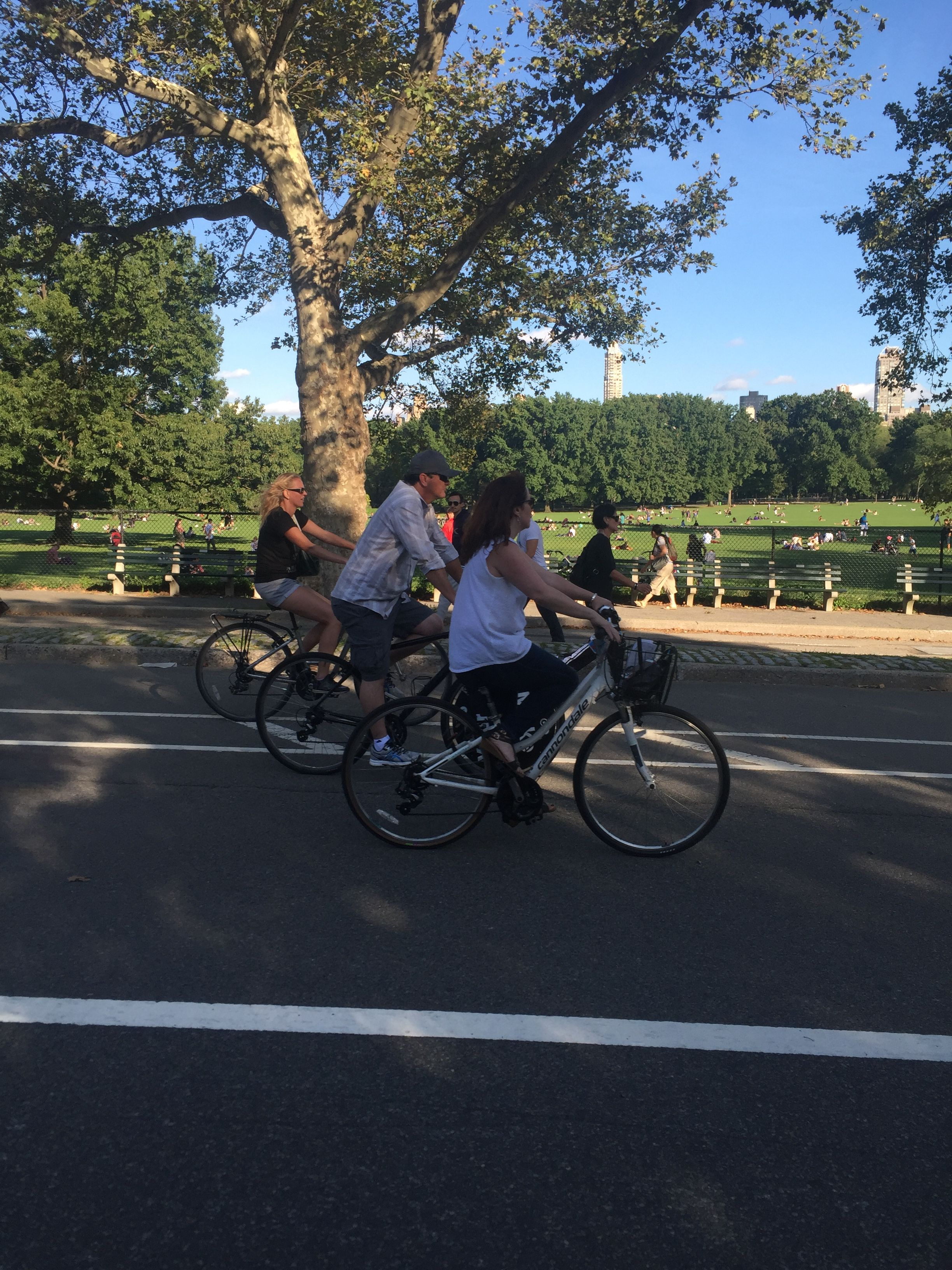 Central Park Sightseeing Bike Rentals 56 West 56th Street Ny Ny