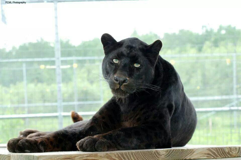 11++ Wildcat valley animal clinic ideas