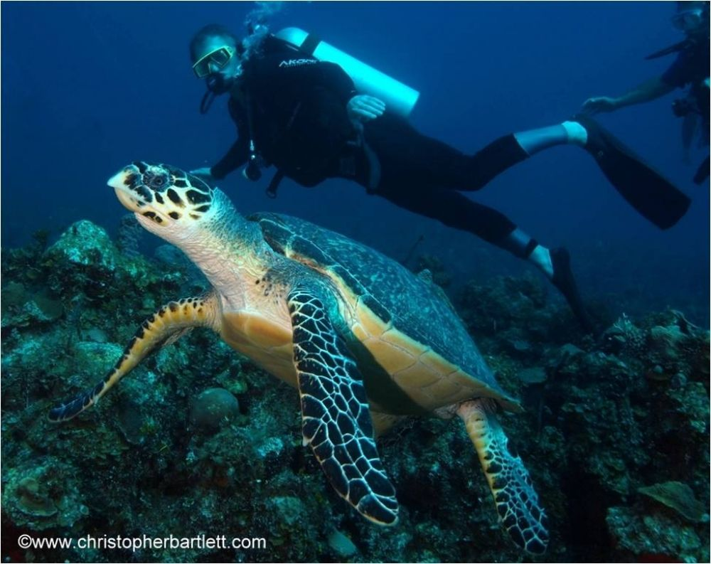 Explore the Andros Barrier Reef, the third largest barrier reef in the world, and enjoy some of the most diverse diving on the planet. Whatever your experience level, whatever your desires, we have it all - caverns, walls, blue holes, wrecks and exciting Bahamas shark diving.