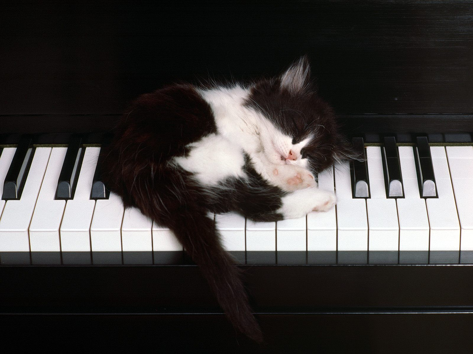 a purrrrrfect piano
