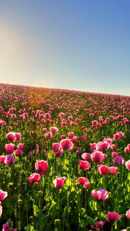 Iphone Wallpaper Beach Hd Best Home Design Ideas Beautiful Flowers Wallpapers Flower Iphone Wallpaper Flower Wallpaper