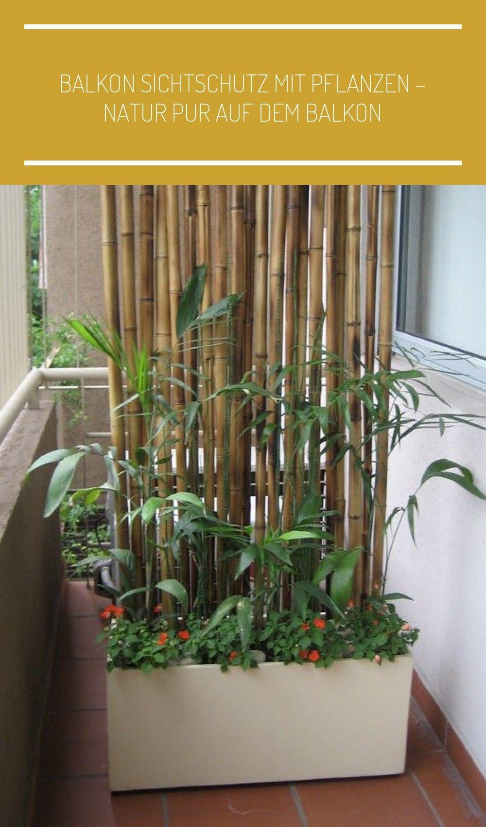 Balkon Sichtschutz Pflanzen Pflanzkuebel Bambusstangen Wand