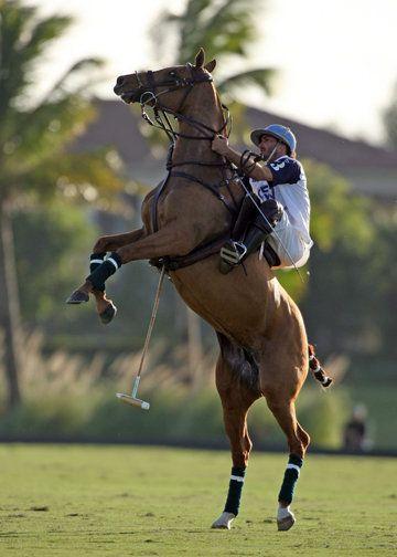 Well Sat Polo Polo Horse Marco Polo Horses