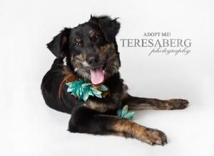 My Foster Sasha Looking Awesome For Her Glamour Shots Animals