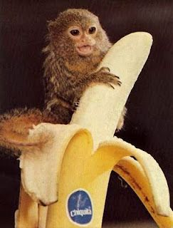 Perspective Do You See A Really Big Banana Or A Really Tiny Monkey Cute Animals Cute Baby Monkey Unusual Animals