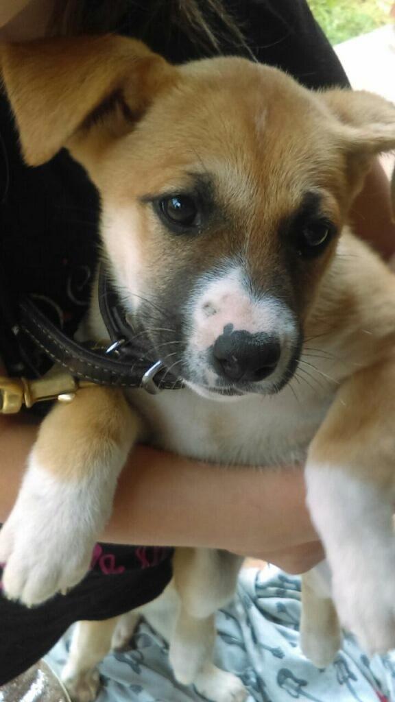 Adopt Haley on Shepherd mix dog, Animal rescue, Pets