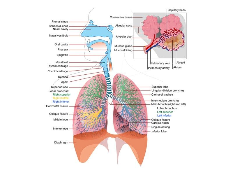 Essay Of India Fddffafadaeecjpg Personal Goal Essay also Sample Informative Essays The Lung Cancer  Lung Cancer Blog  Health  Pinterest  Lung  Nanotechnology Essay