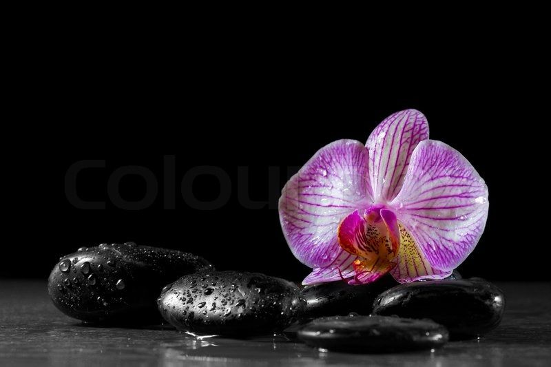Orchid Flower With Zen Stones On Black Background Stock