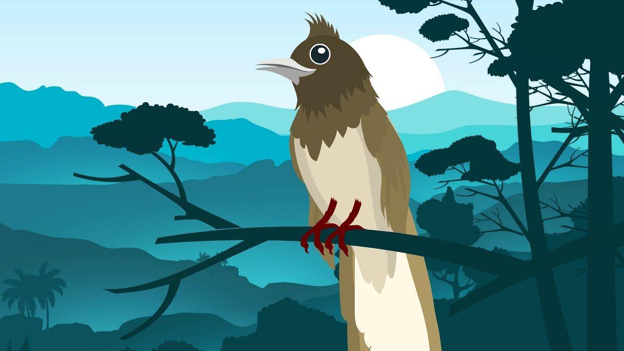 Pin Oleh Cvz Animate Di Lagu Anak Populer Burung Kartun Lucu
