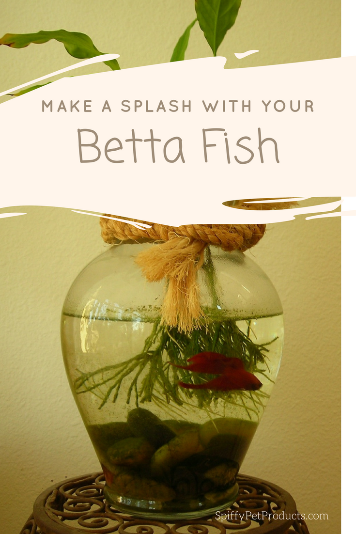 Betta fish how to turn your tank into great home decor howtofish
