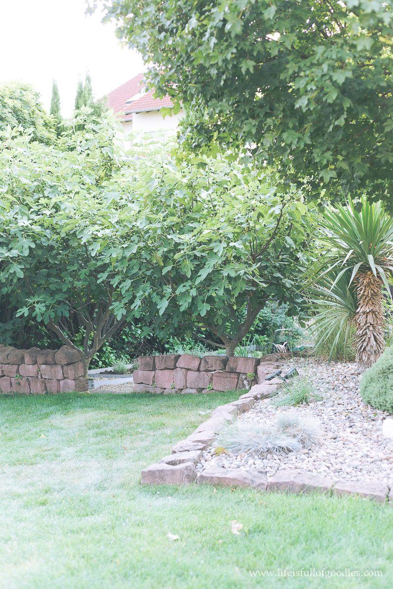 Feigenbaume Ziehen Und Vermehren So Geht S Life Is Full Of Goodies Garten Anpflanzen Gartenbaume Garten Neu Gestalten