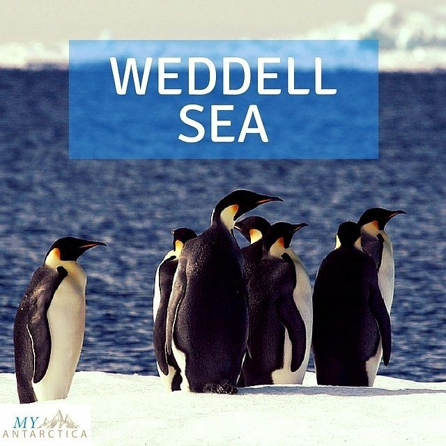 Why go as far as the #WeddellSea? For a chance to be one of the few to see the colony of Emperor Penguins on Snow Hill Island.  Find out more http://ift.tt/2aLBSwr or click on link in bio