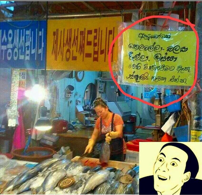 Meanwhile At A South Koren Fish Market From Sri Lankan Memes