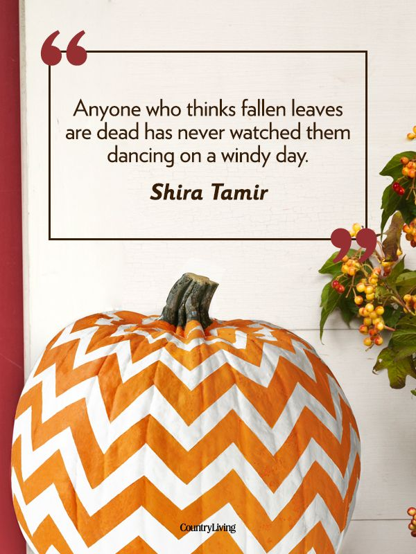 Beau Anyone Who Thinks Fallen Leaves Are Dead Has Never Watched Them Dancing On  A Windy Day    Shira Tamir [Fall Quotes   Autumn Quotes   Country Living]