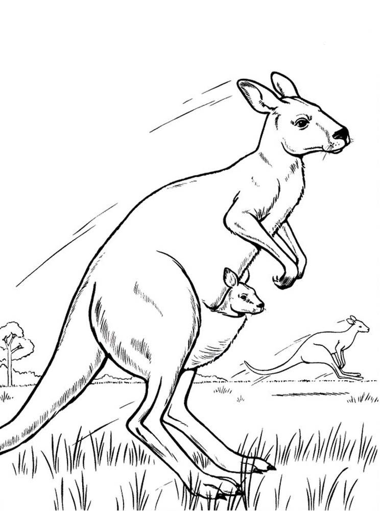 Kangaroo In Habitat Coloring Page Animal Drawings
