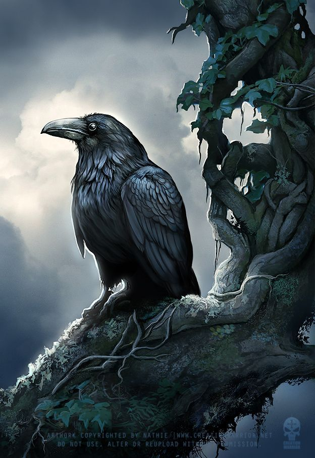 Corvus the tame raven is the mascot of the king … – #Corvus #the #the #des #fantasy #ist