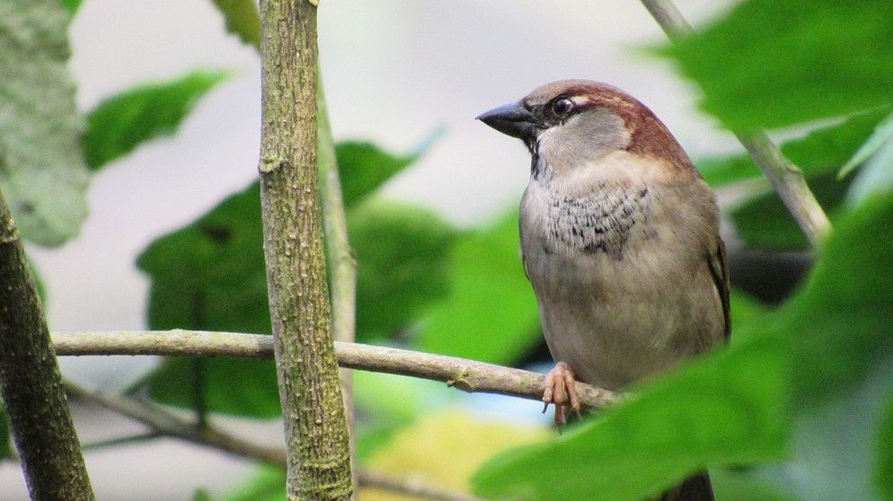 Spatzen Helfen 5 Tipps Wie Wir Spatzen Ein Zuhause Bieten Konnen Br De Vogel Im Garten Spatz Heimtiere