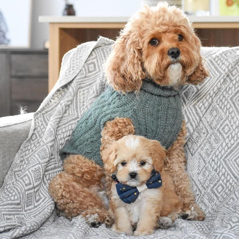 Dusty Sage Jumper Pooky Boo In 2020 Dog Jumpers Boo The Dog Modern Dog