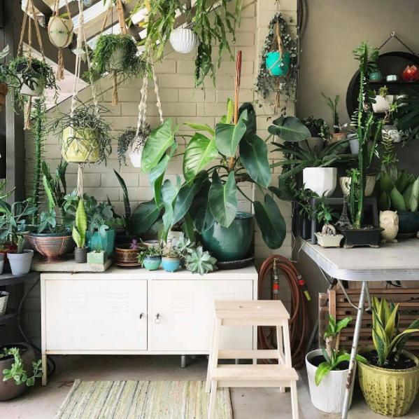 Urban Jungle plants vegetal green mood House