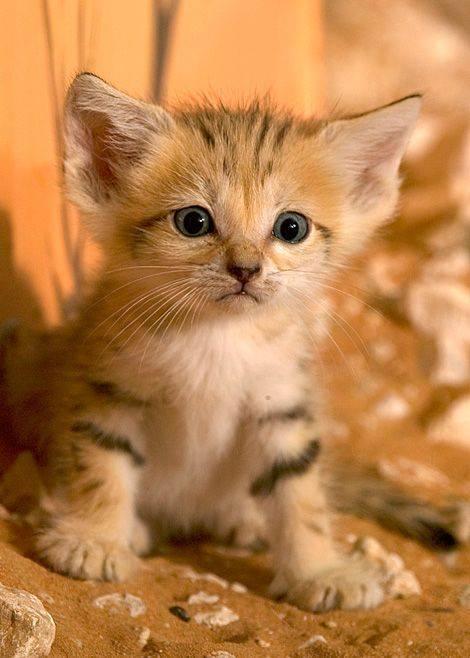 Pin Von Timopepperbag Auf Animal Planet Katzen Tiere Tierbilder