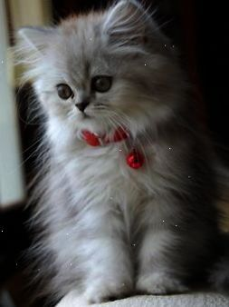 Decorate The Kitty With Holiday Cheer More Kittens Cutest