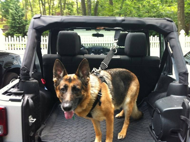 Dog Harness And Attachments Jeep Wrangler Forum Jeep Dogs