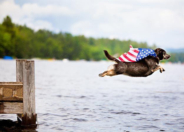 Patriotic Pooches Pets Animals Cute Animals