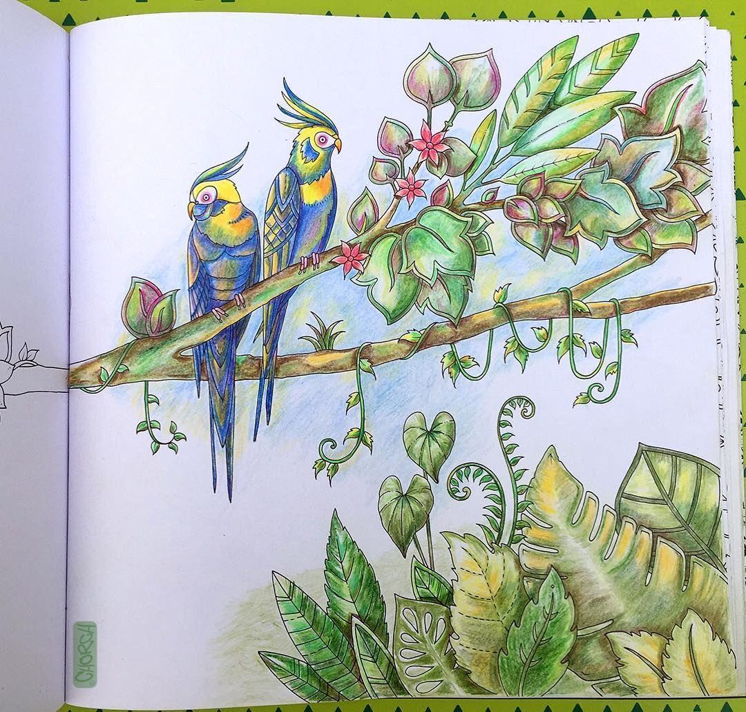 Magical Jungle Johanna Basford Inspiration Johanna Basford Coloring Book Enchanted Forest Coloring Book Millie Marotta Coloring Book