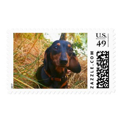 I Miss You Postage Dachshund Puppy Dachshunds Dog Dogs Pet