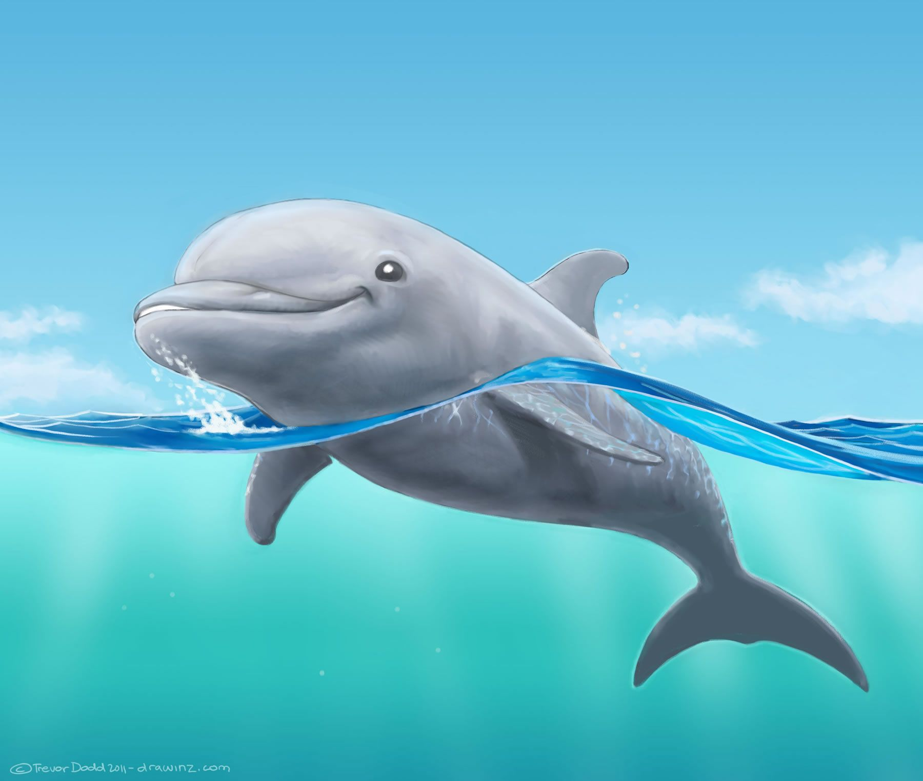 New drawing of a dolphin Drawinz Dolphin painting