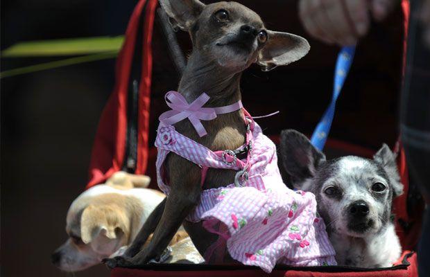 Encontre um lar para seu cãozinho enquanto viaja | #LarParaHospedagemDeCães, #PetHub