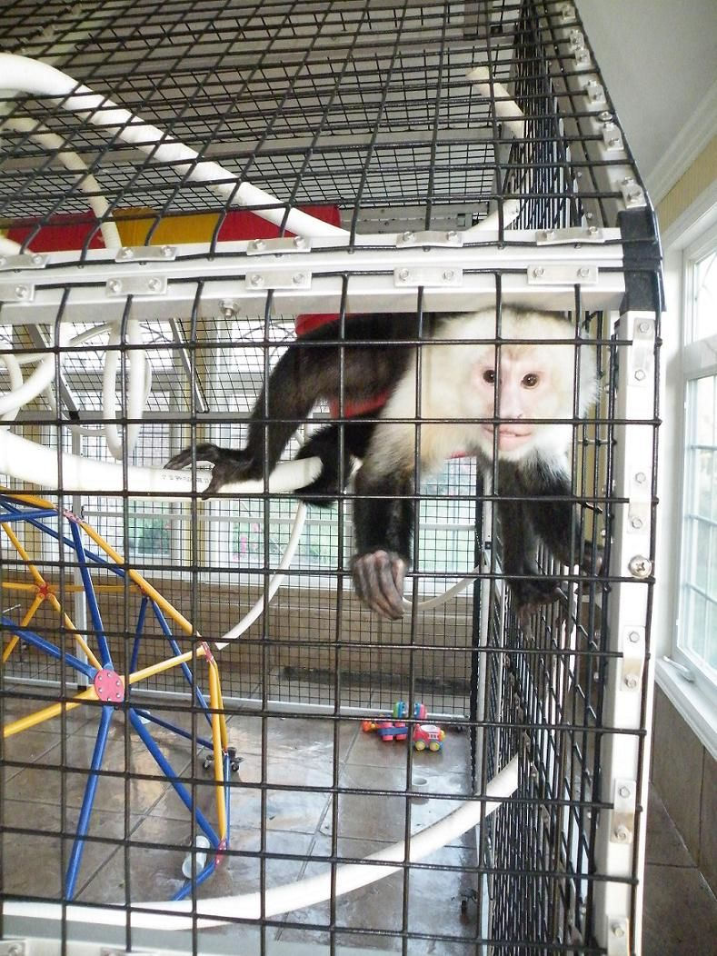 Image result for monkey cage