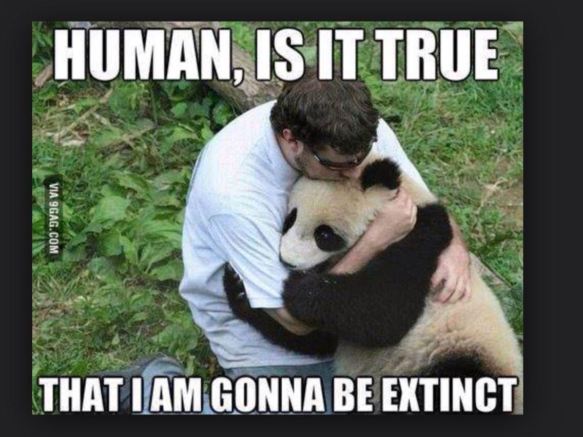 Panda Quotes Panda Hugging Human  Funny Quotes  Pinterest  Panda