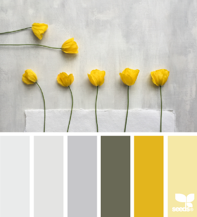 Yellow Color Schemes Poppy Yellow Design Seeds  Color Pallets Seeds And Pallets