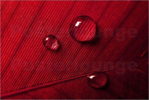 Poster / Leinwandbild Rote Feder - ANOWI