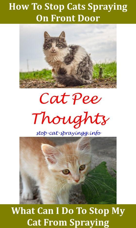 Scat Cat Spray Flea Spray Cat And Bengal