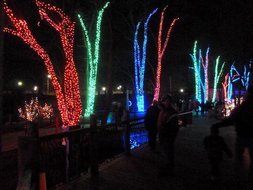 toledo zoo lights before christmas toledo zoo lights and zoo lights - Lights Before Christmas Toledo Zoo
