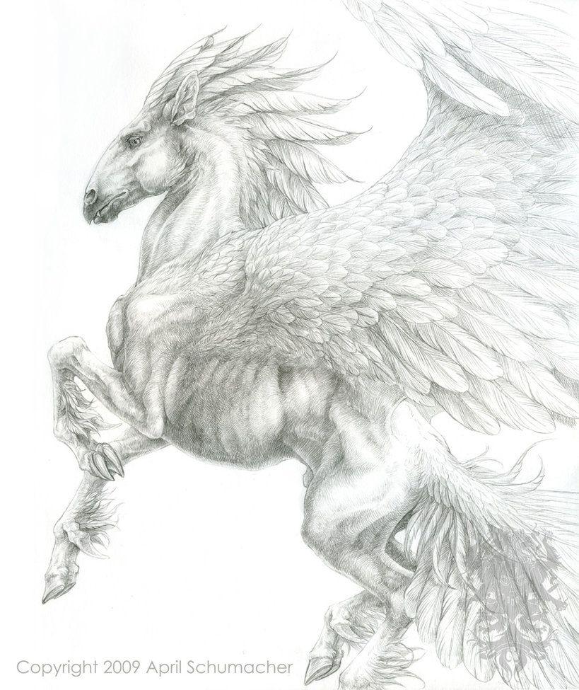 Anatomy study Pegasus and Anatomy on Pinterest