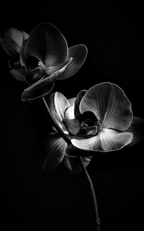 fond ecran fond ecran fleur noir et blanc
