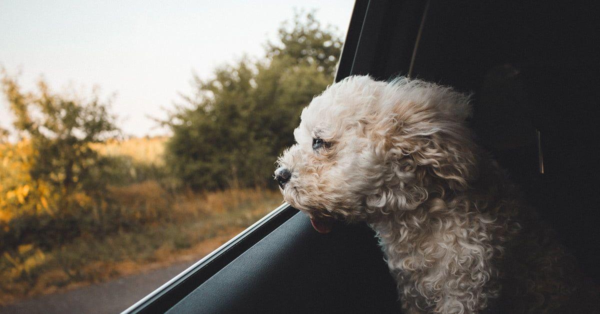 Baywatchs alexandra daddario helps autotrader search pups